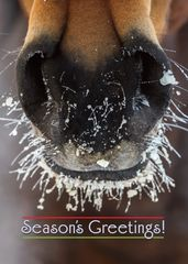 BOXED Christmas Cards: Frosty Muzzle with Season's Greetings! - Item# BX Frosty