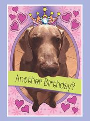 Birthday Card: Mango wearing a Tiara! - Item# GC B Mango