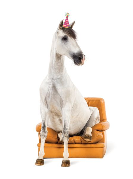 Birthday Card Horse Just Chillin In Chair