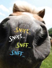 Birthday Card: Sniff, Sniff, Snort, Snort! - Item# GC B Stinkin'!