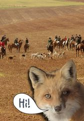 "Birthday Card: Fox ""Hi!"" Fox Hunter - Item# GC B Fox"