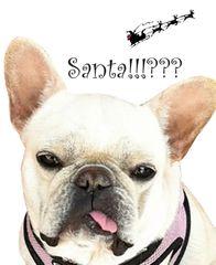 Christmas Card: Santa!!?? French Bull Dog - Item# GC X Zazu