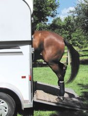 Birthday Card: Horse loading in a trailer - Item # GC Loaded