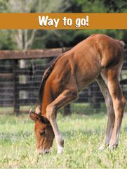 Congratulations Card: Foal - Item # GC Foal