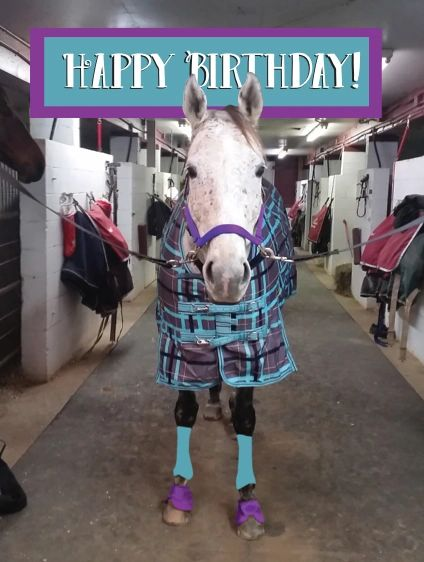 Birthday Card Happy Horse In A Plaid Blanket Item G