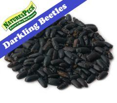 Dried Darkling Beetles 5 lbs / 10 lbs