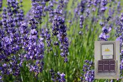 Lavender Fields Triple Wax Melt (One Shell 6-cubes)