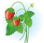 Strawberry & Bran Soap