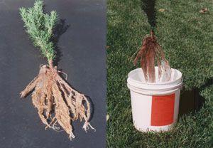 Root Dip Gel - 1 Oz. Package