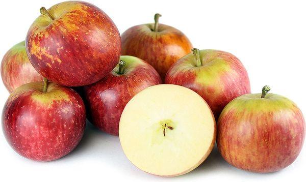 Auvil Early Fuji Apple (4-6')