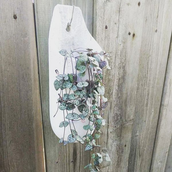Hanging Planter - String of Hearts