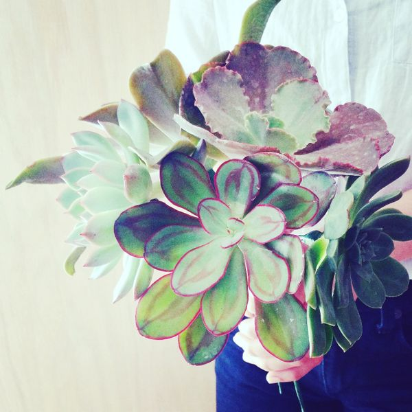 X Large Variety Rosettes Bouquet