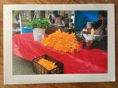 Notecard- Flor de Calabasa- pumpkin flowers