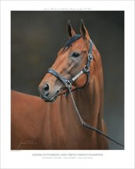 American Pharoah Officially Licensed Open Edition Print