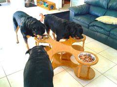 TANK dog dinner table. 4 BOWLS