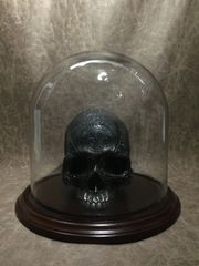 9.75 X 10 Glass Dome for Displaying Zane Wylie Carved Human Skulls