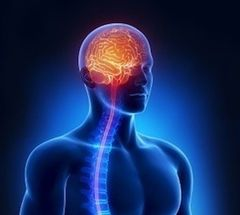 Workshop | Chiropractic Brain Balance February 22, 2018 West Palm Beach, FL 8:30 am to 12:30 pm