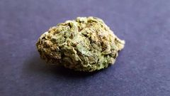 Jack Herer *AVAILABLE