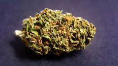 White Widow *AVAILABLE