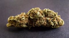 Girl Scout Cookies Orange *AVAILABLE