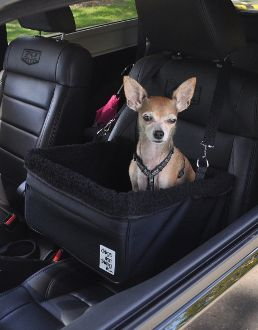 Small Dogs Out Doing Car Booster Seat