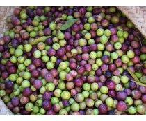 Extra Virgin Olive Oil - California Arbequina, Arbosana & Koroneiki
