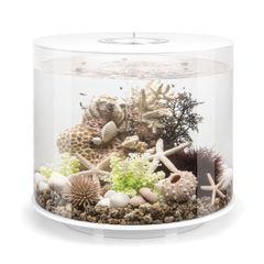 biOrb TUBE 35 Aquarium - 9.2 gallon 45969
