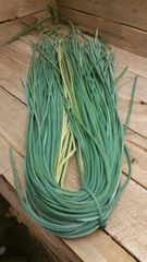 4 ft shoe lace 1/8 wide green