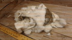 Genuine Rabbit Hide remnants/scraps - Great for crafts-Mixed Colors-G-9-1