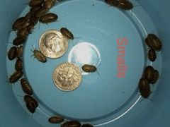 2000 SMALL DUBIA