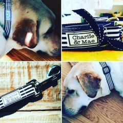 Charlie and Mae Signature Dog Collar