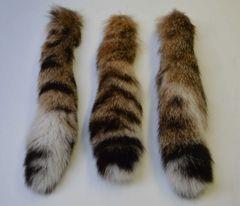 Bobcat Tail