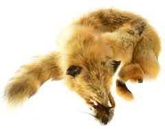 Large Red Fox Fur Pelt