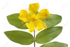 St Johns' Wort Deep Muscle & Joint Pain Relief