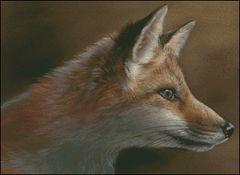 Red Fox Kit Study