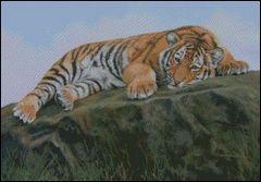 Sultan Tiger Cub