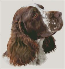 English Springer Spaniel NB
