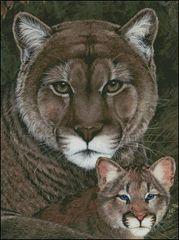 Cougar Family Portrait