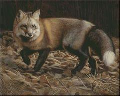 Red Fox - KL