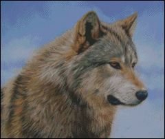 Timber Wolf Face