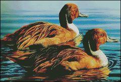Pair of Kings (Pintail Drakes)
