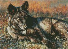 Wolf Eyes - CF