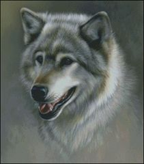 Silver Gray Wolf