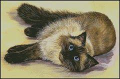 Daydream Cat