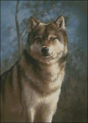 Study of a Timber Wolf