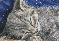 Midnight Slumber