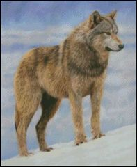 Timber Wolf Stance