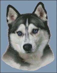 Siberian Husky NB