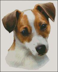 Jack Russell Terrier NB