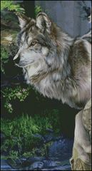 Beautiful Grey Wolf